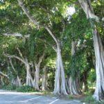 Ferienhaus Cape Coral deutsche vermieter Usa Florida